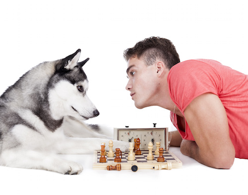 man is playing chess with a dog on a white background in the Studio